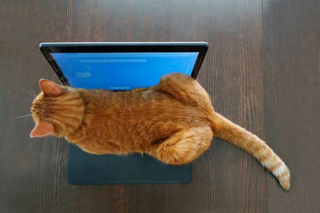 cat-laptop